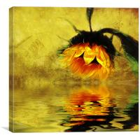 Sunflower Reflection of a Summer Day (3), Canvas Print