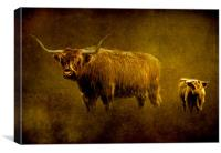 Highland cows., Canvas Print
