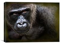 Gorilla, Canvas Print