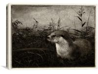 Otter (plate effect), Canvas Print