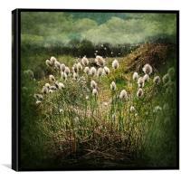 Cotton Grass, Canvas Print