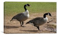 Canadian Geese Warning, Canvas Print
