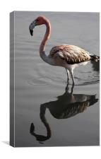 Flamingo Reflection, Canvas Print