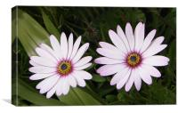 Delightful Daisies, Canvas Print