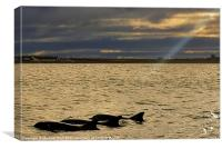 Spot Light On Dolphins, Canvas Print