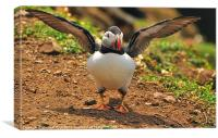 I Believe I Can Fly......., Canvas Print