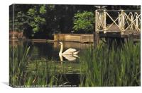 Swanning About, Canvas Print