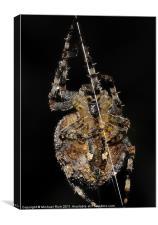 Sidney Spider., Canvas Print
