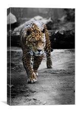 Jaguar on the Hunt, Canvas Print