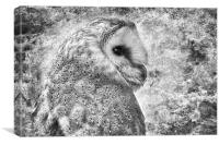 Barn Owl Portrait, Canvas Print