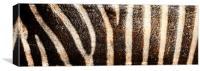 Grevy's Zebra Print, Canvas Print