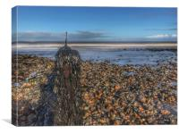 Seaweed covered groyne on Sheringham beach, Canvas Print