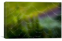 Web of Water, Canvas Print