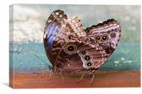 Siamese Butterflies, Canvas Print