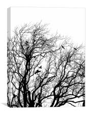 taking flight, Canvas Print