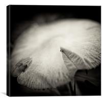 wild mushroom, Canvas Print