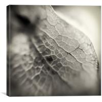 Closer to the Shoo Fly, Canvas Print