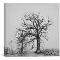 A Driad in Deep Winter, Canvas Print