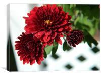 red chrysanthemums, Canvas Print