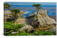 Cypress and rocks in Monterey, Canvas Print