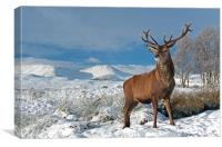Deer Stag, Glencoe, Canvas Print