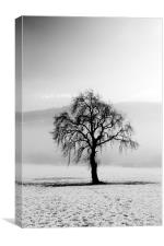 Lone tree in the snow, Canvas Print