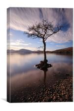 Lone tree in water, Canvas Print