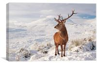 Deer Stag in the snow, Canvas Print