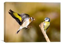 Goldfinch and Bluetit, Canvas Print