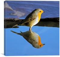 Robin reflection, Canvas Print