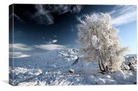 Glencoe snowscape, Canvas Print