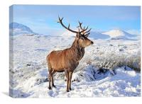Deer Stag in snow, Canvas Print
