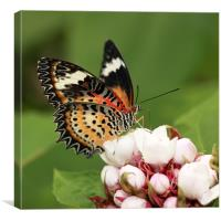 Malay Lacewing, Canvas Print
