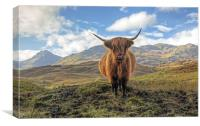 Highland Cow, Canvas Print