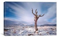 Rannoch Moor Tree, Glencoe, Canvas Print