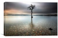 Lone Tree, Canvas Print