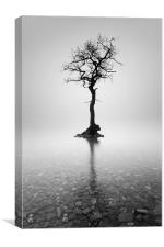 Lone Tree in the mist, Canvas Print