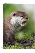 Otter portrait, Canvas Print
