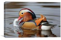 Mandarin Duck, Canvas Print