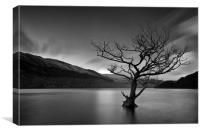 Loch Tree, Canvas Print