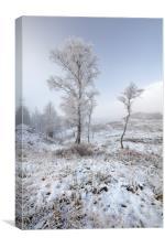 Glen Shiel Misty Winter Trees, Canvas Print
