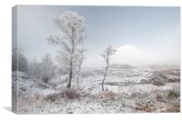 Glen Shiel Misty Winter Trees, Canvas Print