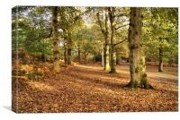 New Forest Trees, Canvas Print