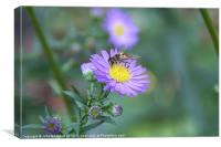 Aster, Canvas Print