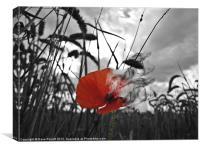 War Poppy - Burning, Canvas Print