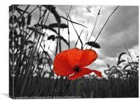 War Poppy, Canvas Print
