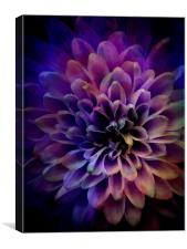 FLOWER POWER, Canvas Print