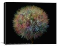 MY PRETTY DANDELION, Canvas Print