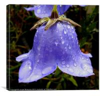 BELL FLOWER CAMPANULA, Canvas Print