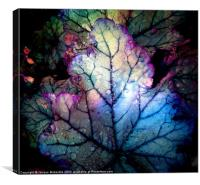 HEUCHERA, Canvas Print